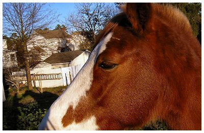An older photo of the horse that was behind our house in Raleigh, NC.