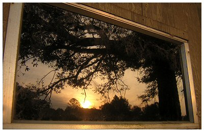 The back window to my grandfather's shed in Satsuma, Alabama.