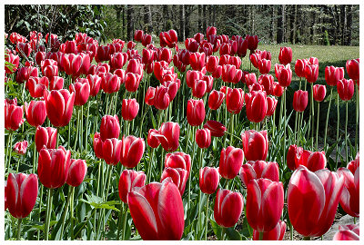From Garvan Woodland Gardens...